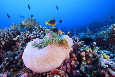 Les fonds marins du Pacifique Sud